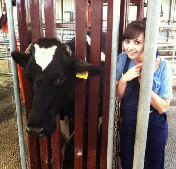 Sophie Beauty and the Beasts Cow
